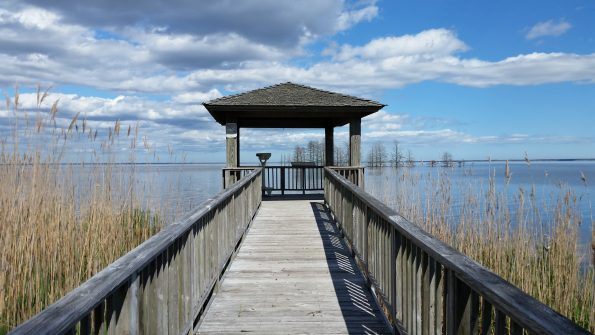 Lake Mattamuskeet observation deck.